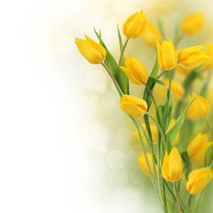 Yellow tulips with copy space