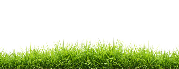 Photo sur Aluminium Herbe fresh spring green grass