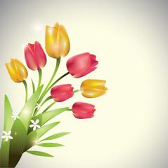 Tulips bouquet.Vector