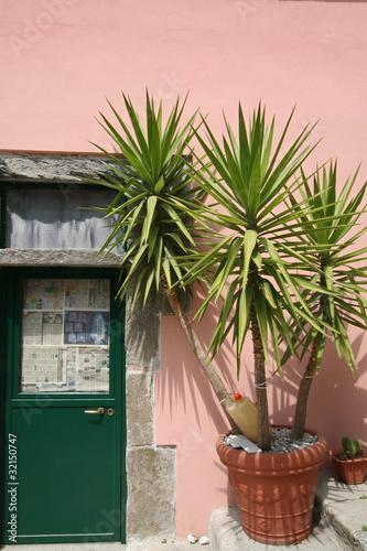 palmier en pot xxl