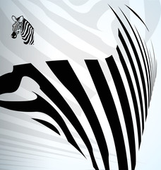 vector zebra abstract background with text