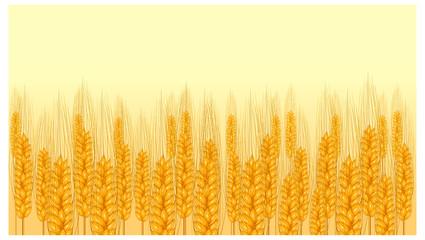 ear wheat on yellow