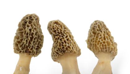 Fototapeta Three yellow morel mushrooms obraz