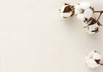 Cotton flower on cotton cloth