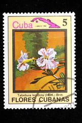 flower Cuba