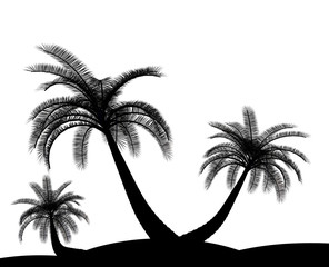 Black on white palm tree holiday environment