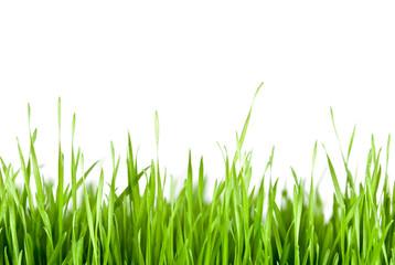 grünes Gras Textfreiraum oben