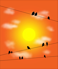 bird on the wires