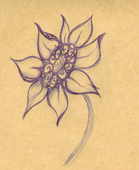 The drawn flower