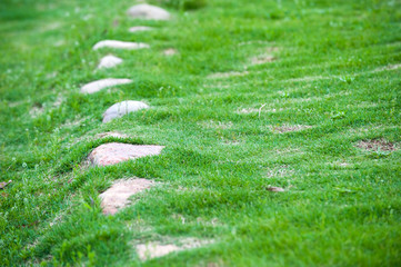 stone under meadow