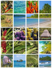Tropical collage in the archipelago of Bocas del Toro, Central America, Panama