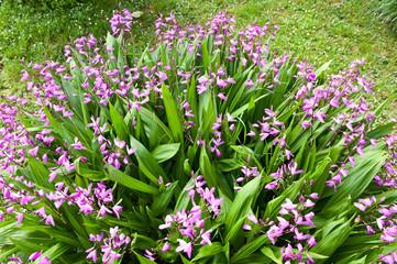 fiori 1297