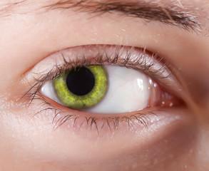 yellow eye. Macro shot