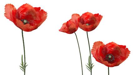 3d poppies