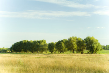 August trees