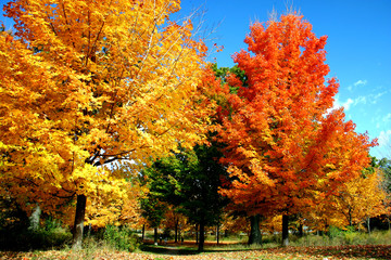 Fall Foliage in the Park