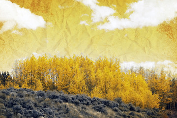 Old Picture Effect - Aspen Trees in Colorado on sunny autumn day