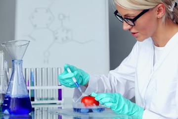 tomato DNA