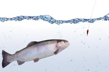 Fische 113