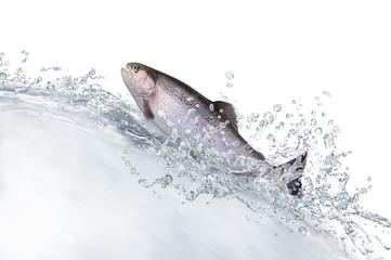 Fische 130