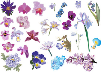 lilac and blue color flowers collection