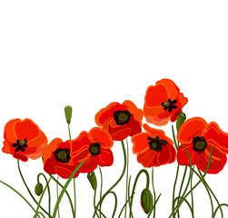 Background with poppy