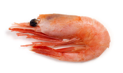 raw, frozen shrimp on white background.
