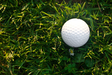 background of spring green grass and golf ball