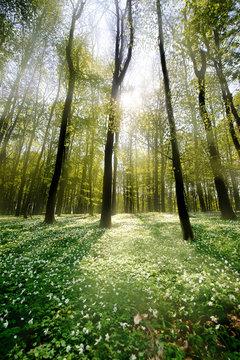 Waldlichtung im Gegenlicht 2