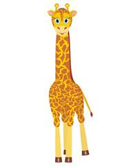 Illustration of cartoon giraffe on white background