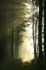 Keuken foto achterwand Bos in mist Trail in the deciduous forest on a foggy morning