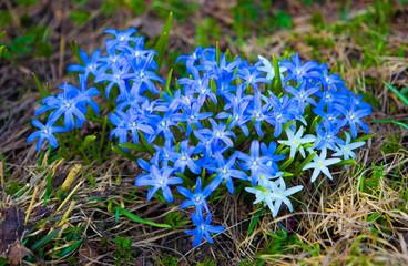 Heartshaped Blue flowers