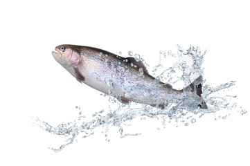 Fische 124