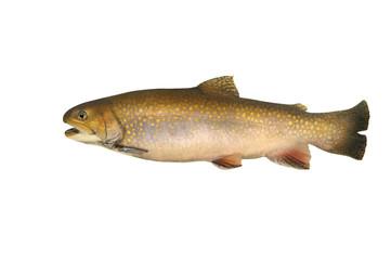 Fische 140