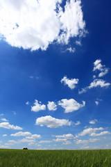 Unter blauen Himmel