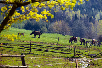 Beautiful spring landscape of green hills and horses