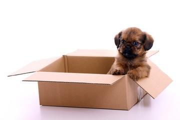 Hund Welpe sitzend im Karton