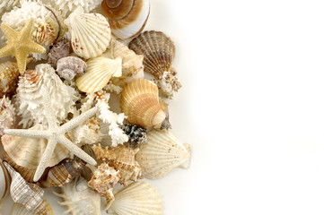 Starfish and shells. Isolated on white.