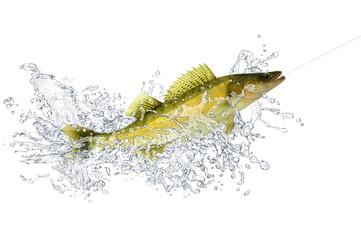 Fische 95