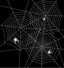 vector illustration of spiders and webs