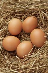 Five eggs in nest