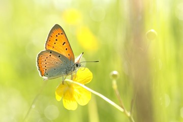 Butterfly on a yellow flower on a spring morning
