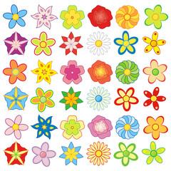Obraz Paczka kolorowych kwiatów - fototapety do salonu