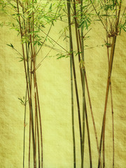 Fototapete - bamboo on old grunge antique paper texture .