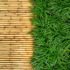 green grass on bamboo background