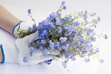 Hands of the farmer with a bunch of blue flowers