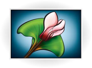 Pink Cyclamen Flower