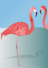 Canvas Prints Flamingo flamingo