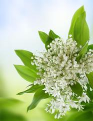 Photo sur Aluminium Muguet de mai Flowers. Lily of the valey.