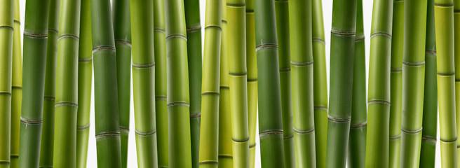 Poster Bamboe 竹林特写